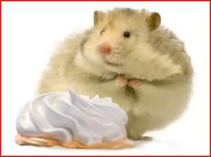obese_rat