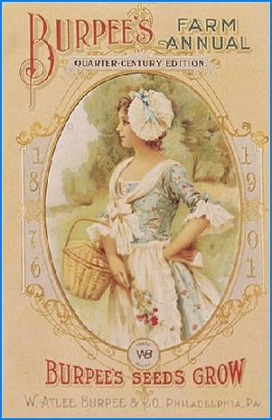 Burpee 1901