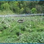 Technical School Garden Philippines