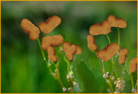 Flowers=McNuggets