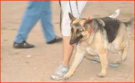 Mighty Texas Austin Dog Walk