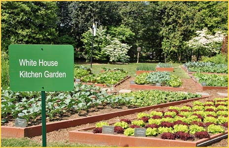 Gardens The White House And Let S Move