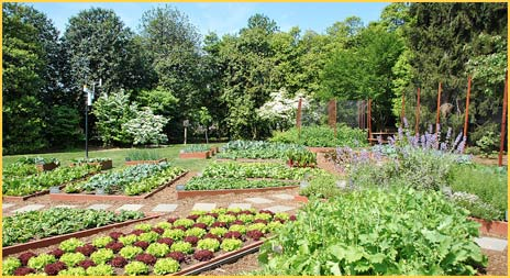 White House Kitchen Garden 2