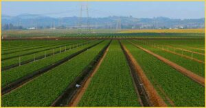 Monterey-County-Agriculture