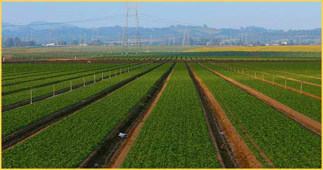 Monterey County agriculture