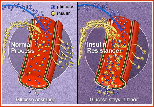 Glucose and Insulin Flow in the Body