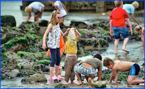children playing in rock pools