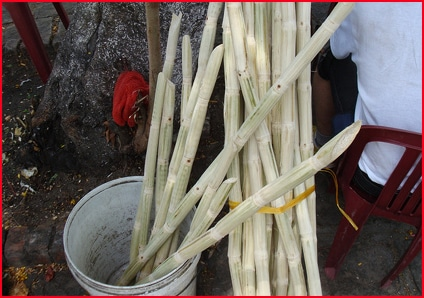 Sugar Cane Juice Shop