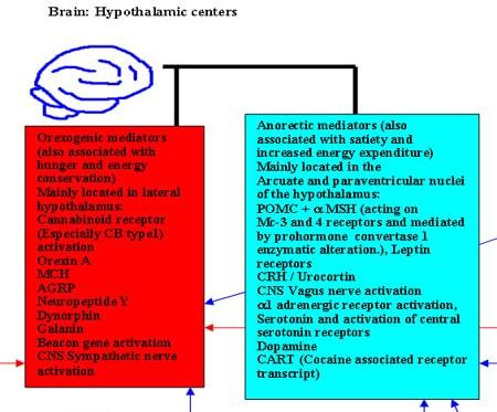 neurocircuits segment