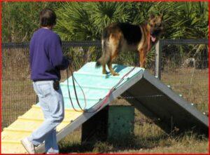 Dog Training - Jan 2009