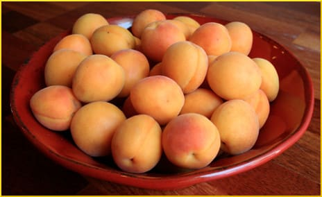 Fresh-picked apricots