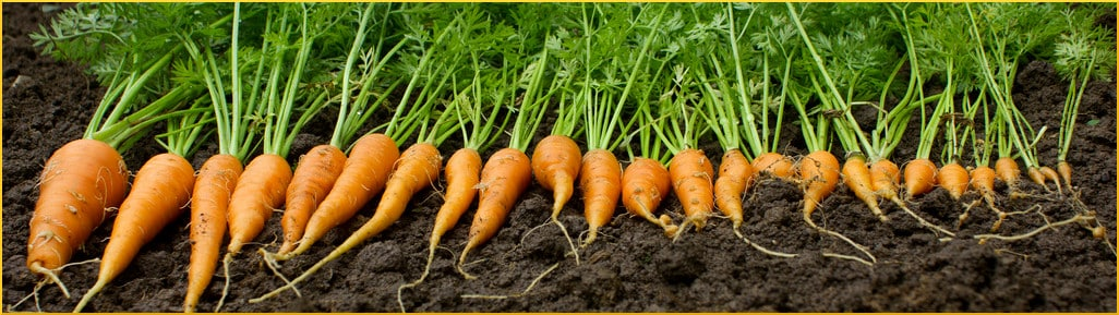 diversity in the carrot patch