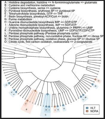 Phylogeny Figures