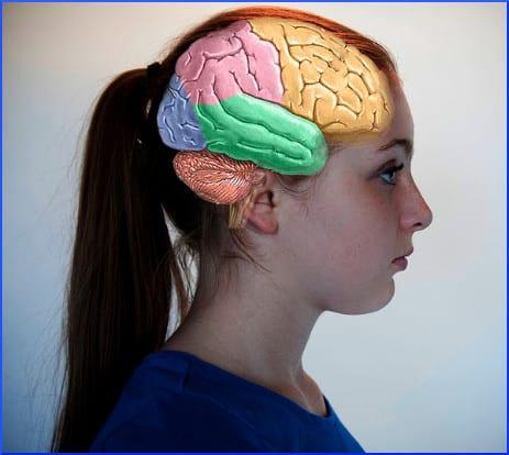 superimposed-brain