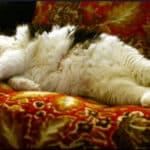 big-cat-sleeping