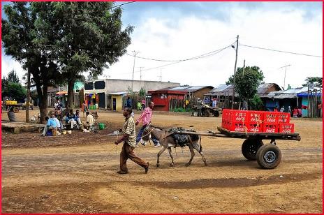 donkey-coca-cola-delivery