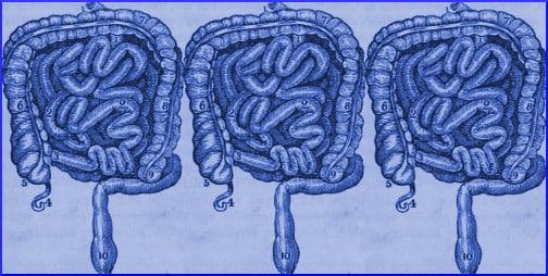 intestines-blue-illustration