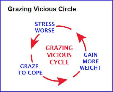 vicious-cycle-grazing