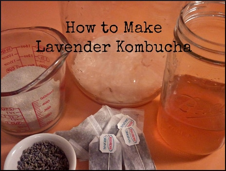 how-to-make-lavender-kombucha