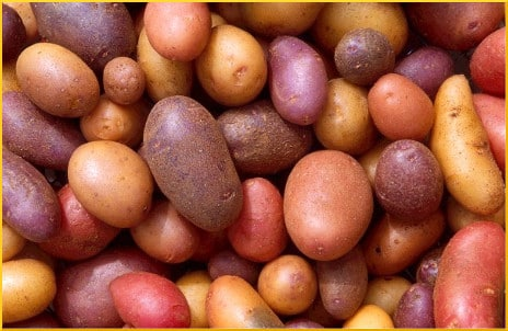 potatoes-closeup
