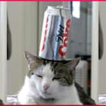 cat-with-coke-can-on-head