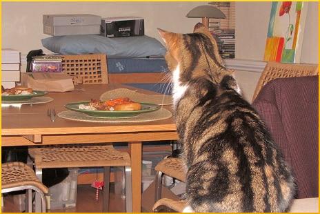cat-tempted