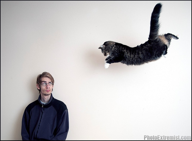 cat-pounce